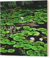 Lily Pad Turtle Camo Wood Print