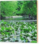 Lily Pads Along Unami Creek Wood Print