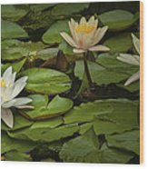 Lily Pads And Blossoms. No204 Wood Print
