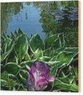 Lily Pond6 Wood Print