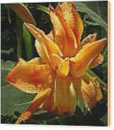 Lily Survival Wood Print