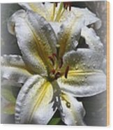 Lily Sweet Lily Wood Print