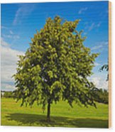 Lime Tree In Summer Wood Print