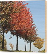 Line Of Autumn Trees Wood Print