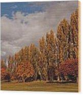 Line Of Trees Wood Print