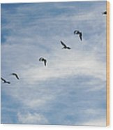 Linear Flock Of Pelicans Wood Print