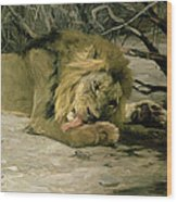 Lion Reclining In A Landscape Wood Print