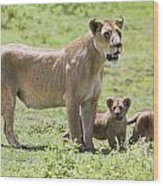 Lioness With Cubs Wood Print by Carson Ganci