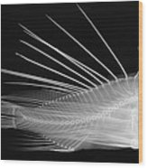 Lionfish X-ray Wood Print