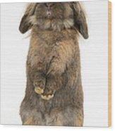 Lionhead Rabbit Wood Print
