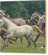 Lipizzan Horses Wood Print