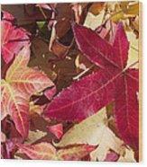 Liquidambar Autumn Wood Print