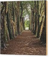 Lismore, County Waterford, Ireland Wood Print