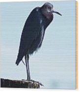 Little Blue Heron I Wood Print