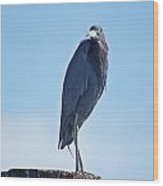 Little Blue Heron II Wood Print