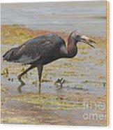 Little Blue Heron In Swamp Wood Print