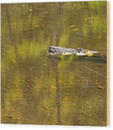 Little Carp River Bed 1 Wood Print