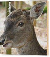 Little Deer Wood Print by Karen Grist