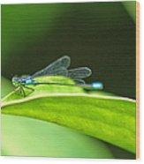 Little Dragonfly Wood Print