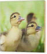 Little Duck. Wood Print