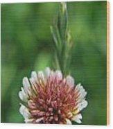 Little Flower Wood Print