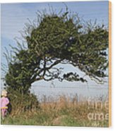 Little Girl And Wind-blown Tree Wood Print