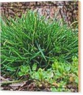 Little Grass Mound Wood Print
