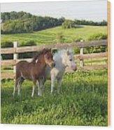Little Horses At Pasture Wood Print