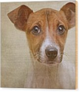 Little Jack In Pastels Wood Print by Pat Abbott