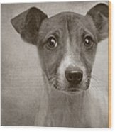 Little Jack Monochrome Wood Print by Pat Abbott