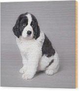 Little Landseer Puppy Portrait Wood Print