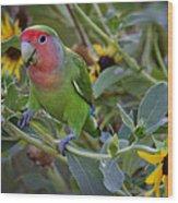 Little Lovebird Wood Print
