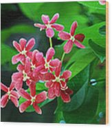 Little Pink Chinese Honeysuckle Flowers  Wood Print