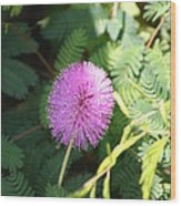 Little Purple Bloom Wood Print