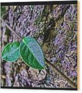 Little Vine Wood Print