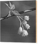 Little White Bells Wood Print