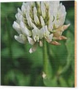 Little White Flower Wood Print
