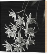 Little White Orchids In Black And White Wood Print