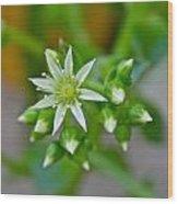 Little White Star Wood Print