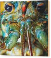 Live New England American Lobsters From Cape Cod Wood Print