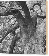 Live Oak Wood Print by Waverley Manson