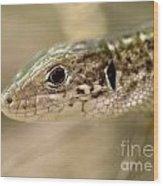 Lizard Portrait Wood Print