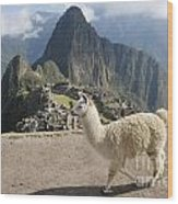Llama And Machu Picchu Wood Print
