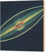 Lm Of A Diatom Alga, Caloneis Permagna Wood Print by Eric Grave