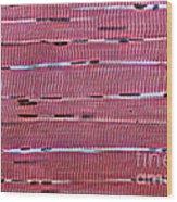 Lm Of Skeletal Muscle Wood Print