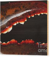 Lobster Claw Wood Print