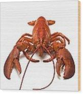 Lobster Wood Print by David Nunuk
