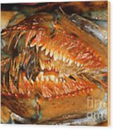 Lobster Mouth Wood Print