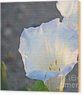 Loco Weed Flowers 1 Wood Print