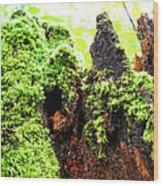 Log Moutain Wood Print